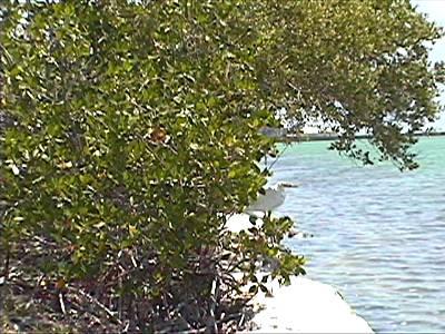 Key West Hemmingway Home