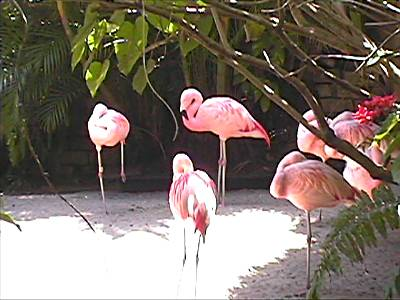 Sunken Gardens - St. Petersburg, Florida